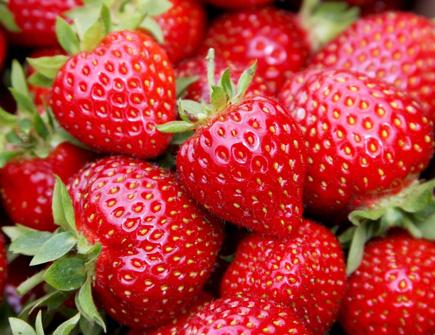 erdbeeren-001