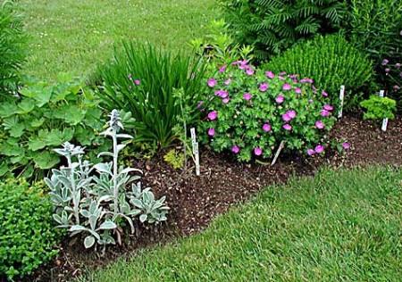 herb-garden1-450x316