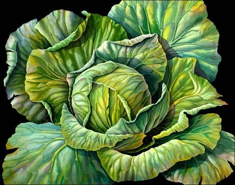 cabbage-460x362