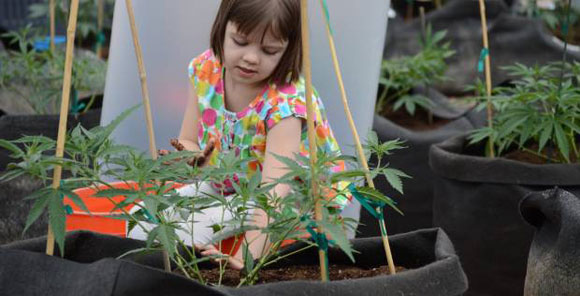 Charlotte marijuana