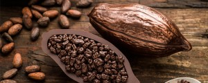 Cocoa-pods-story-300x120