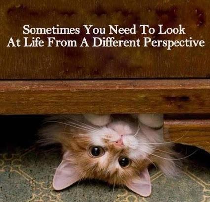 cat upside down 60609_121133904707151_549862257_n
