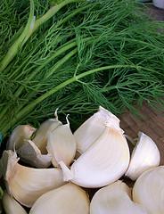 dill and garlic 3849488969_0bfa3d99b3_m