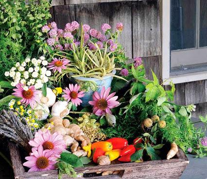 herbal-remedies jpg