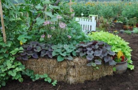 straw-bale-garden-2