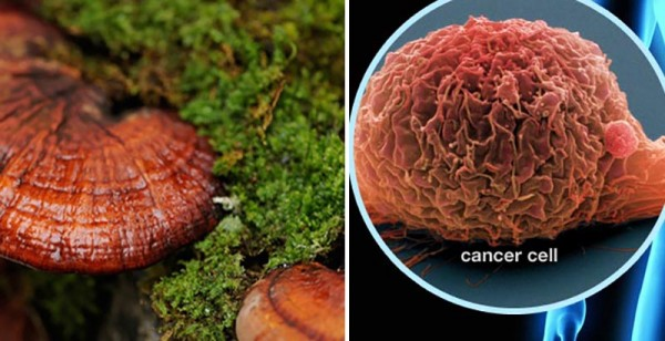 cancercures-600x308