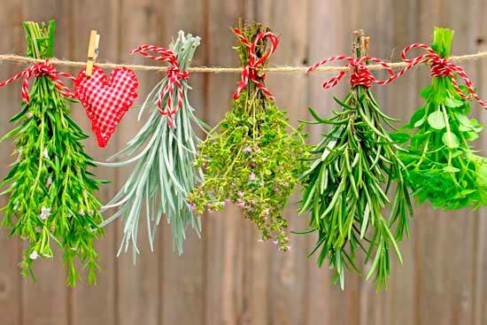 magical-herbs