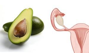avocado-uterus