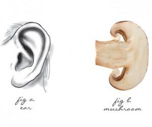 mushroom-ear