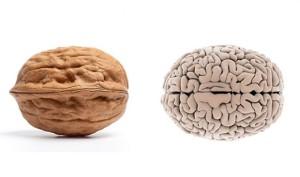 wallnuts-brain