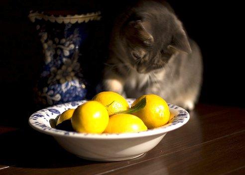 cat-citrus-coat