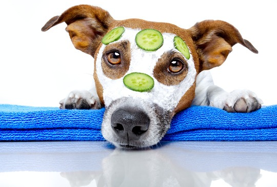natural-remedies-pets