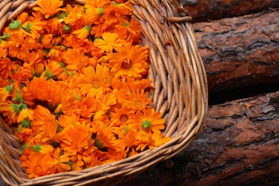 marigold-salve