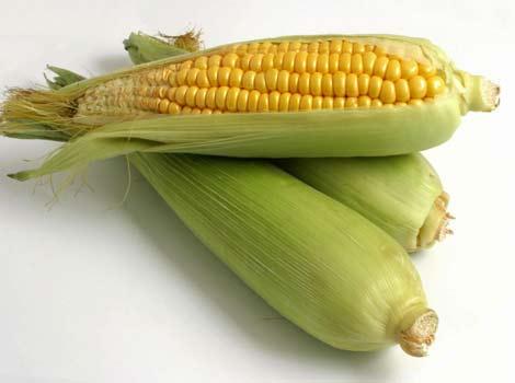 Култури на царевицата (1) от Марион Колева