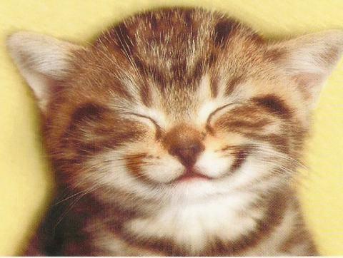 Шест стъпки към щастлива котка у дома