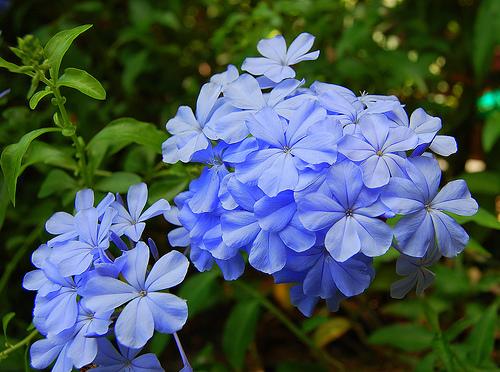 Може ли цвете да ви направи по-умни?