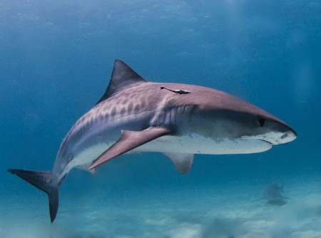 100 милиона акули умират всяка година
