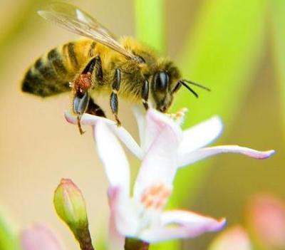 И пчелите загряват с напитка!