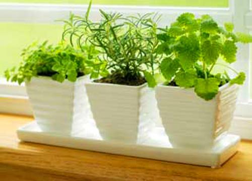 Оазис от билки у дома