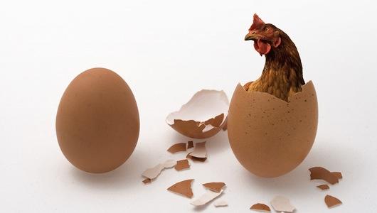 Загадката решена – кокошката наистина предшества яйцето