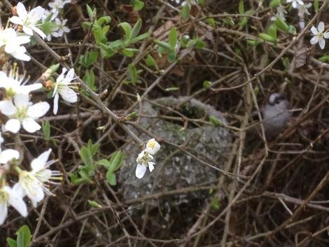 Как пчелите крадат гнездата на птиците