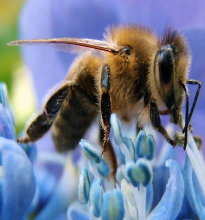 Повече от 30 милиона пчели намерени мъртви в Елмуд, Канада