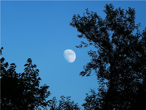 Лунната диета, основи за изграждането й