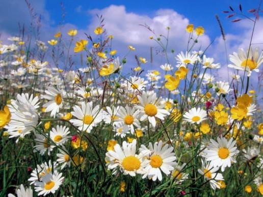 Необикновени ползи от обикновена билка