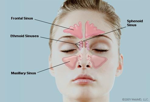 sinus-chart