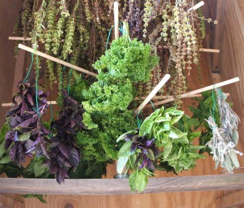 Дълбока детоксикация с билки и хранителни вещества
