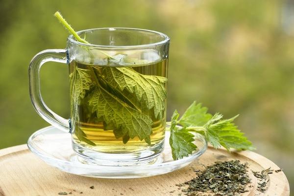 Копривата през вековете, чай с модерен вкус