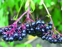 Поредният малко познат супер плод