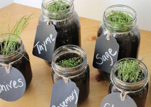 Направете си сами билкова градина в буркани