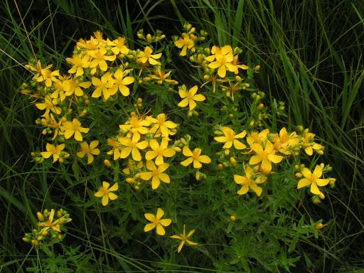 Пет естествени алтернативи на антидепресантите