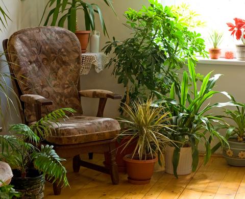 Растения пречистват дома