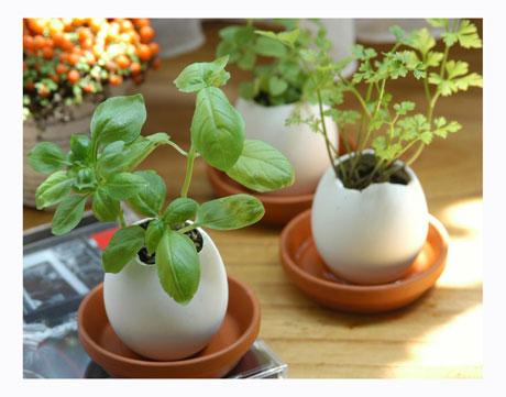 Украси дома си или подари, оригинална яйчена градинка