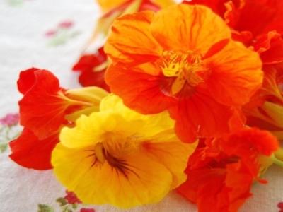 Латинките – красиви, лековити и вкусни