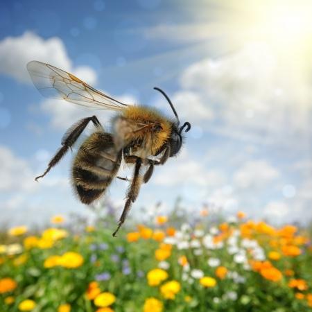 Паркинсон излекувана от ужилвания от пчели?