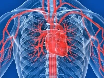 7 стъпки за подобряване на кръвообръщението през целия ден