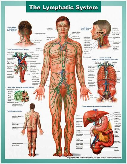 Детоксикация на лимфната система, още един начин