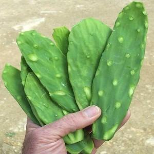Cactus-300x300