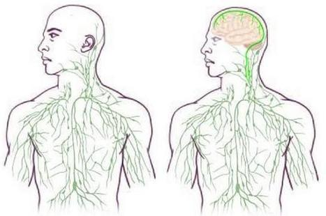 brain-lymph