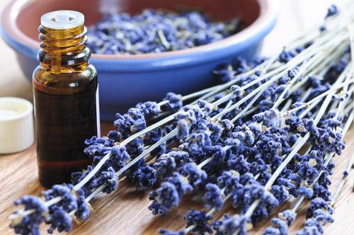 Облекчете стреса и премахнете пърхота с лавандула, незаменимото етерично масло
