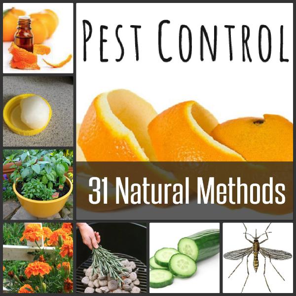 31-Natural-Pest-Control-Methods