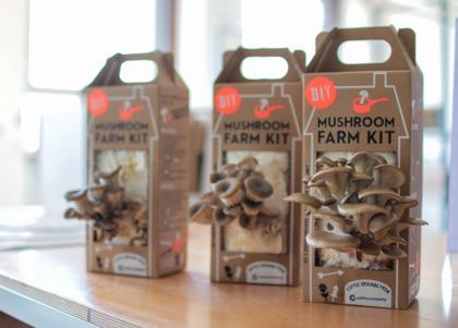 mushroom-kit