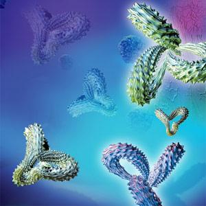 CD47-antibodies