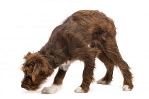 Най-полезните 10 неща, които можем да научим от кучетата