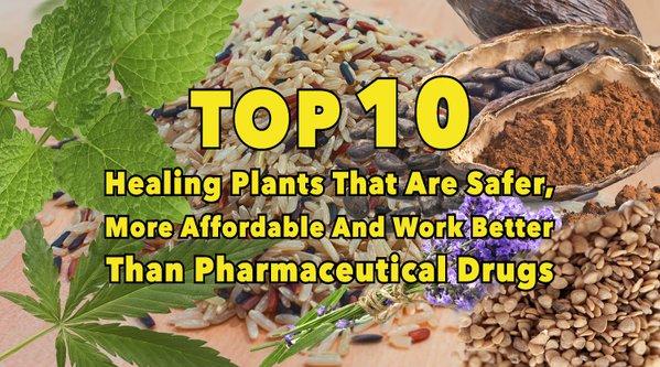 Най-ефикасните 10 растения, които действат по-добре от фармацевтичните лекарства