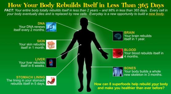 Как тялото възстановява себе си за по-малко от 365 дни