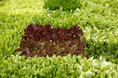 eating-green-leafy-vegetables-may-lower-glaucoma-risk